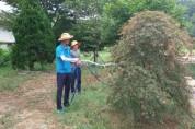 <포토뉴스>죽어가는 나무 살려내는 공무원